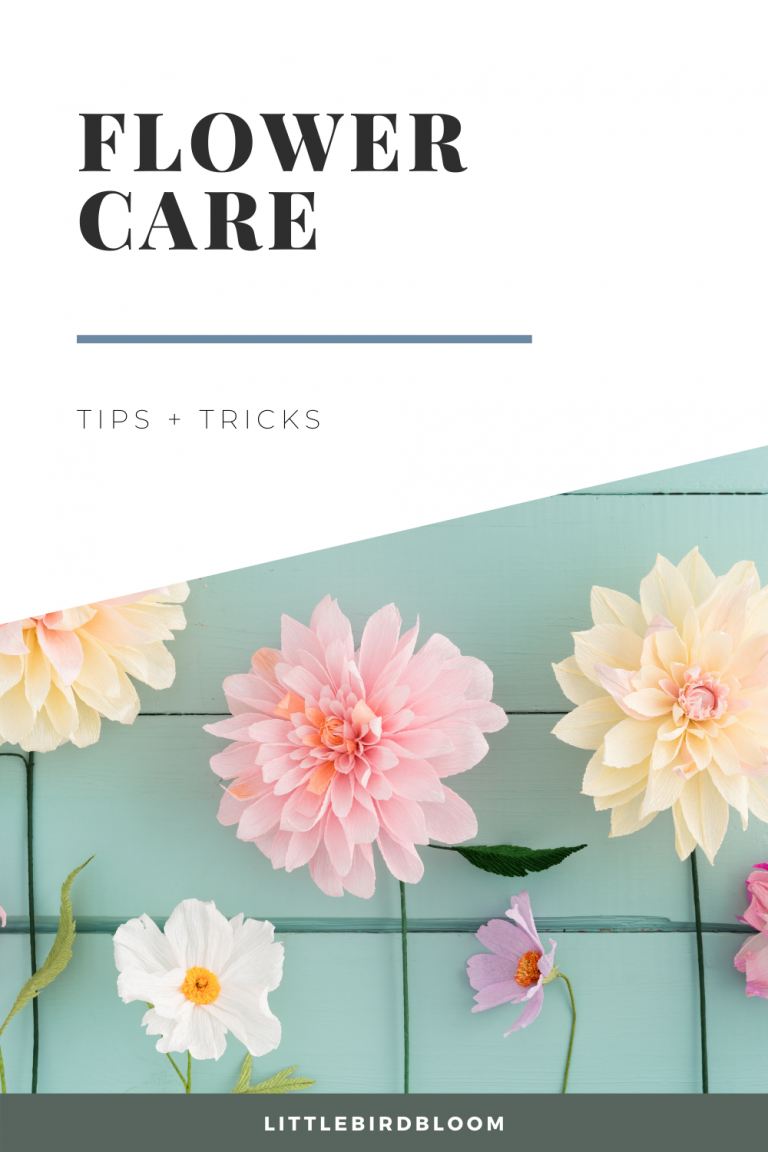 flower care tips + tricks